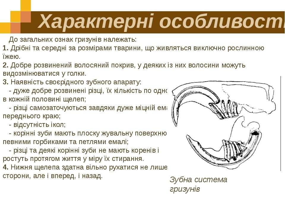 Характерні особливості До загальних ознак гризунів належать: 1. Дрібні та сер...