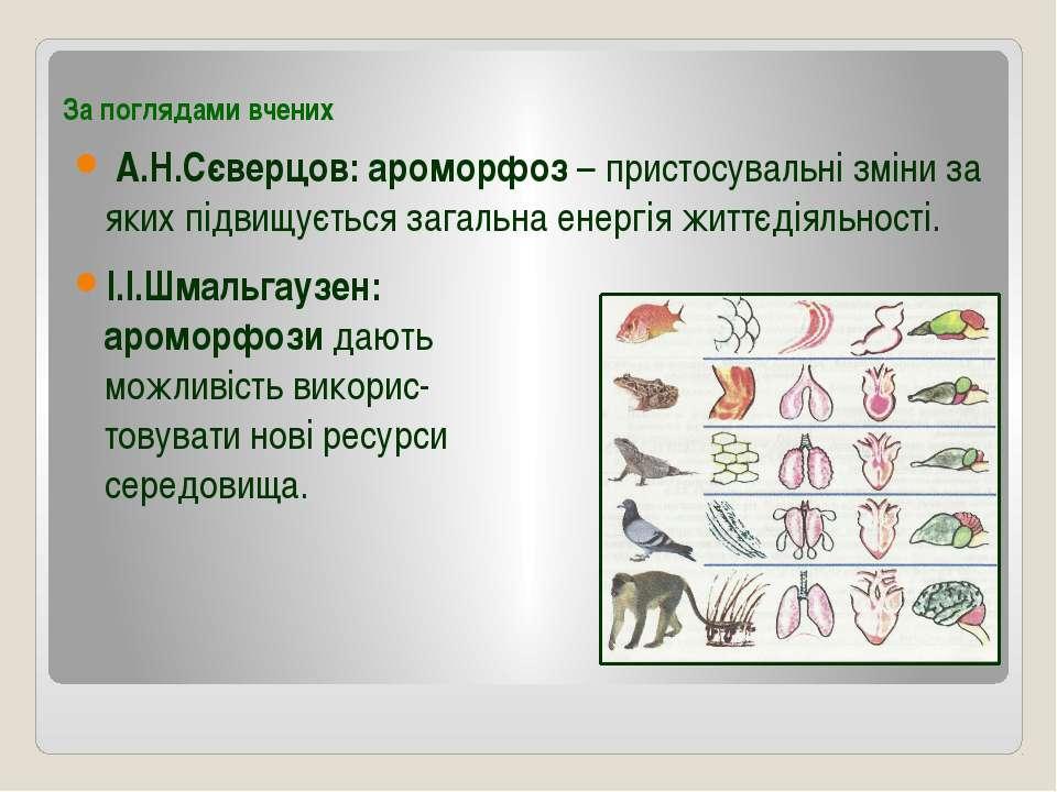 За поглядами вчених А.Н.Сєверцов: ароморфоз – пристосувальні зміни за яких пі...