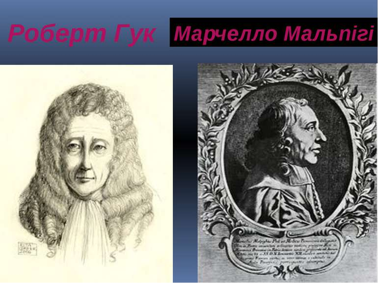 Роберт Гук Марчелло Мальпігі