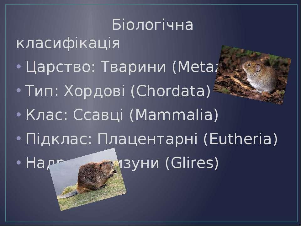 Біологічна класифікація Царство: Тварини (Metazoa) Тип: Хордові (Chordata) Кл...