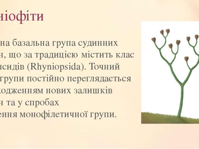 Риніофіти Викопна базальна групасудинних рослин, що за традицією містить кла...
