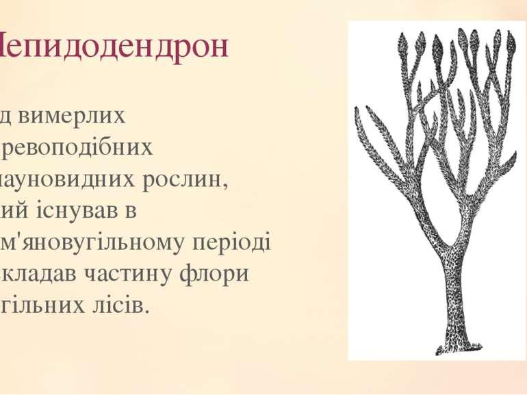 Лепидодендрон Рід вимерлих деревоподібних плауновидних рослин, який існував в...