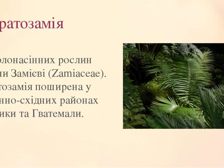 Цератозамія Рід голонасінних рослин родиниЗамієві(Zamiaceae). Цератозамія п...