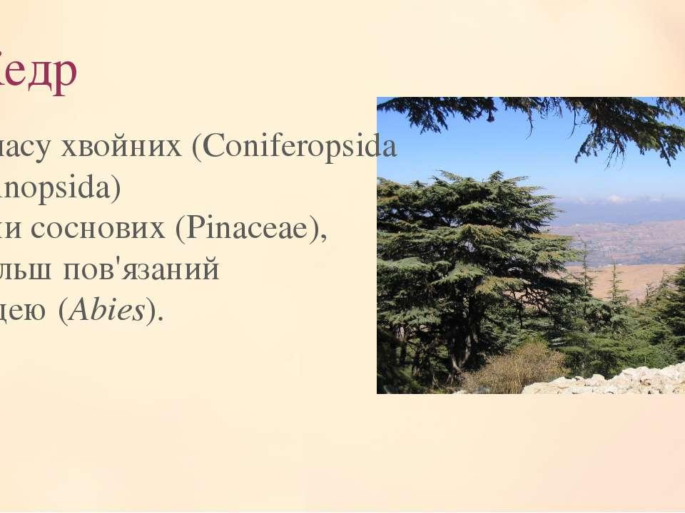 Кедр Рід класу хвойних (Coniferopsida або Pinopsida) родинисоснових(Pinacea...