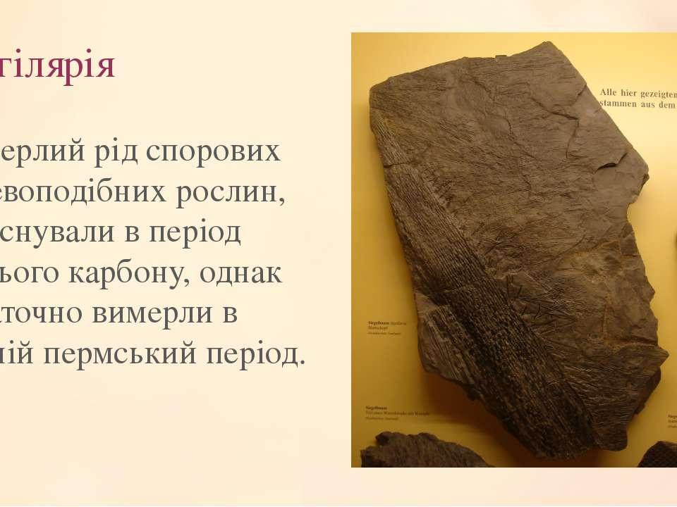 Сигілярія Вимерлий рід спорових деревоподібних рослин, що існували в період п...