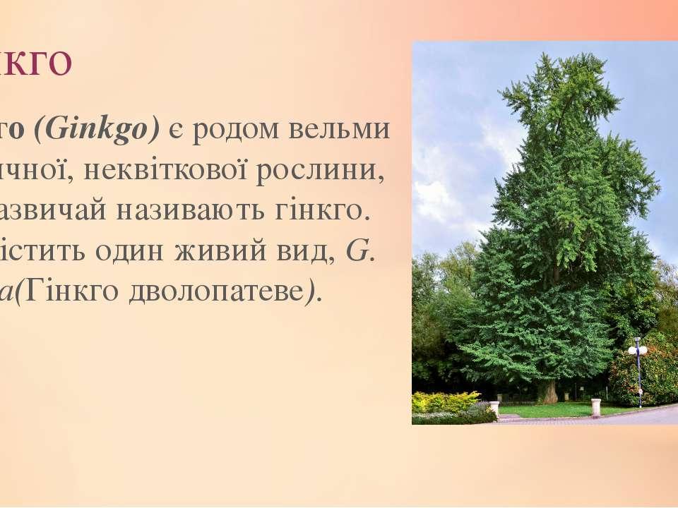 Гінкго Гінкго(Ginkgo)є родом вельми незвичної, неквіткової рослини, яку заз...