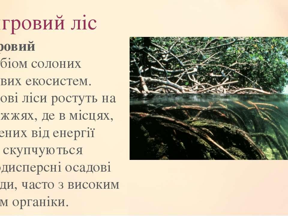 Мангровий ліс Мангровий ліс—біомсолоних берегових екосистем. Мангрові ліси...