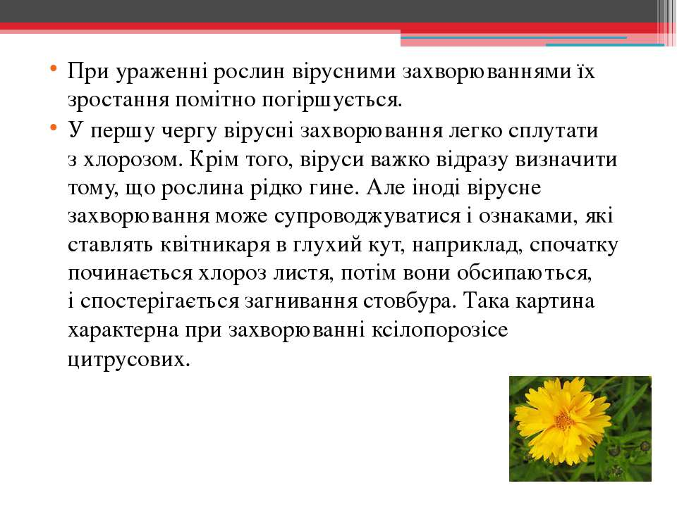 При ураженні рослин вірусними захворюваннями їх зростання помітно погіршуєтьс...