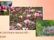 Сезон світіння магнолій – 10 видів
