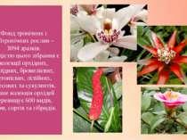 Фонд тропічних і субтропічних рослин – 3094 зразків. Гордістю цього зібрання ...