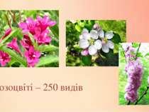 Розоцвіті – 250 видів
