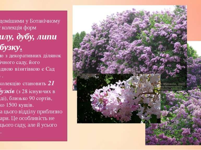 Найвідомішими у Ботанічному саду є колекція форм кизилу, дубу, липи та бузку....