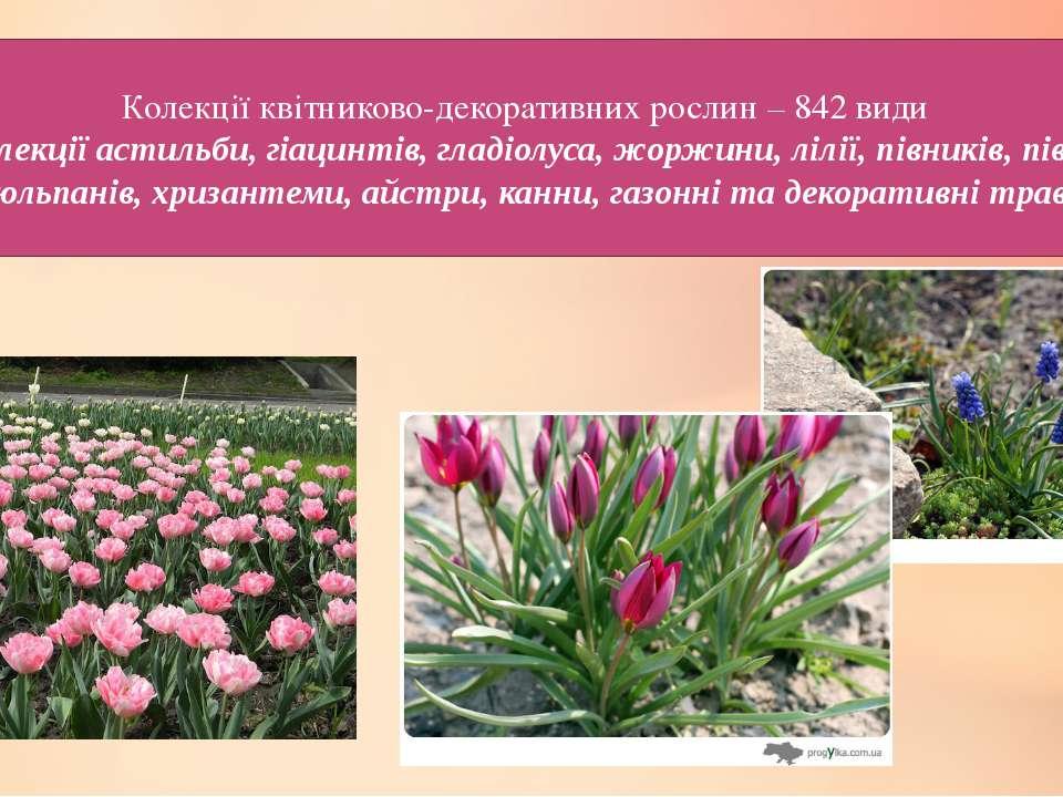 Колекції квітниково-декоративних рослин – 842 види – колекції астильби, гіаци...