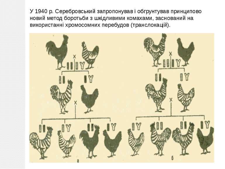 У 1940 р. Серебровський запропонував і обгрунтував принципово новий метод бор...