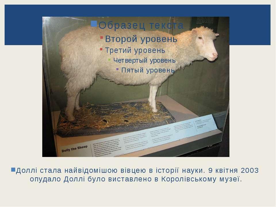 Доллі стала найвідомішою вівцею в історії науки. 9 квітня 2003 опудало Доллі ...