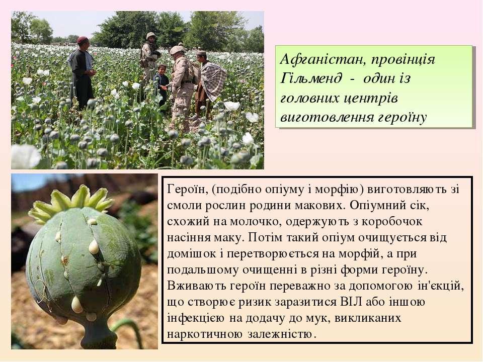 Героїн, (подібно опіуму і морфію) виготовляють зі смоли рослин родини макових...