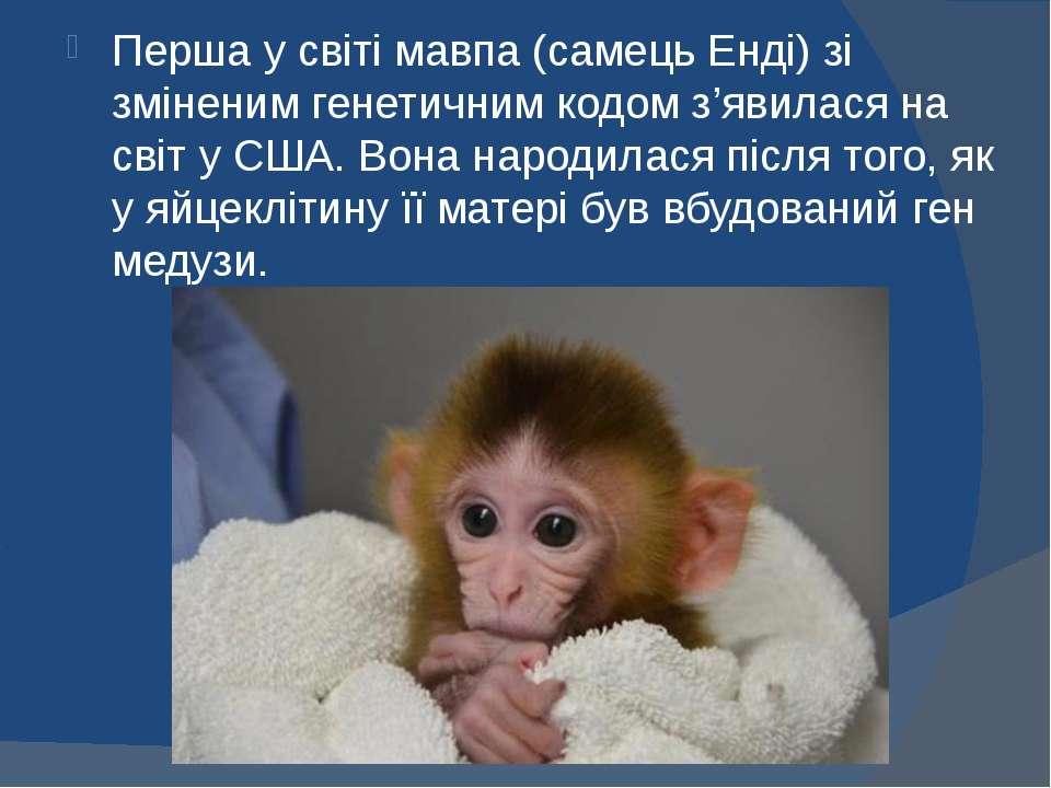 Перша у світі мавпа (самець Енді) зі зміненим генетичним кодом з'явилася на с...