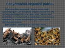 Популяційно-видовий рівень організації характеризується високим біорізноманіт...