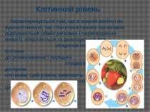 Характеризується тим, що в кожній клітині як одноклітинних, так і багатокліти...