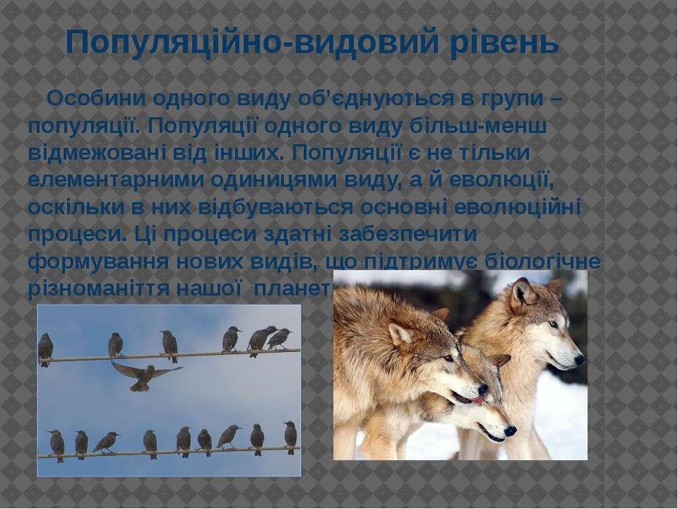 Особини одного виду об'єднуються в групи – популяції. Популяції одного виду б...