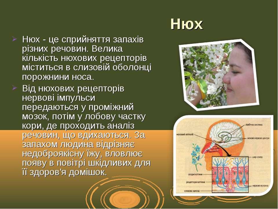 Нюх- це сприйняття запахів різних речовин. Велика кількість нюхових рецептор...