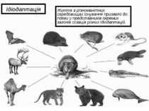 Ідіодаптація Життя в різноманітних середовищах існування призвело до появи у ...
