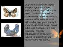 Широке поширення серед тварин протекційного забарвлення, що робить їх менш по...