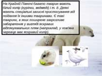 На Крайній Півночі багато тварин мають білий колір (куріпки, ведмеді) і т. д....