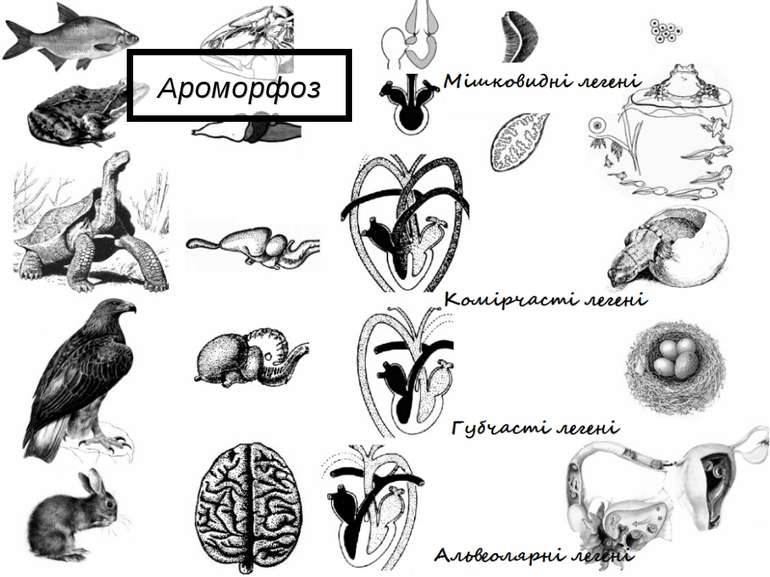 Ароморфоз