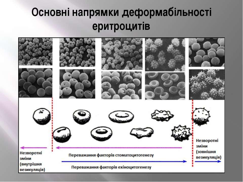 Основні напрямки деформабільності еритроцитів
