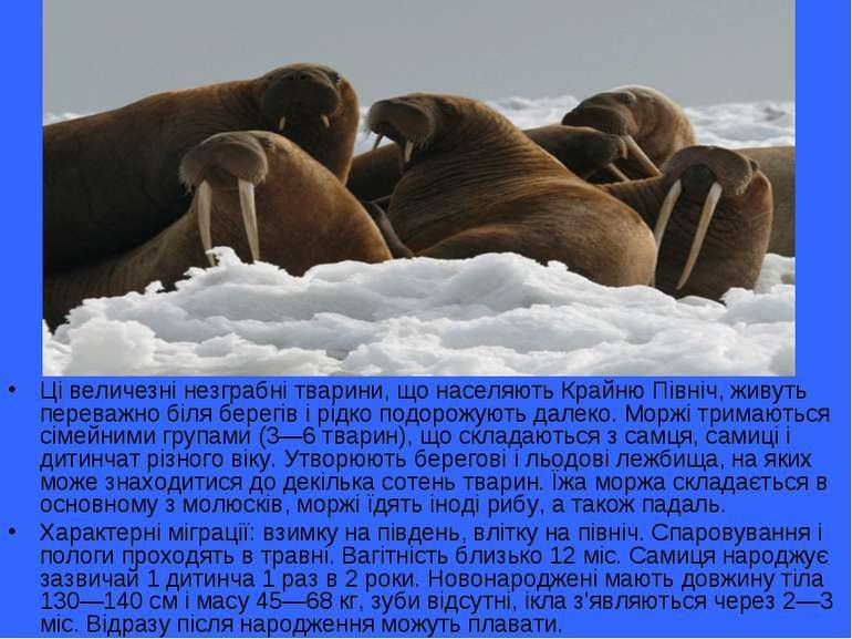 Ці величезні незграбні тварини, що населяють Крайню Північ, живуть переважно ...