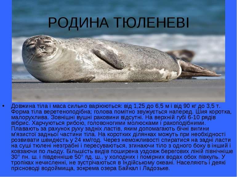 РОДИНА ТЮЛЕНЕВІ Довжина тіла і маса сильно варіюються: від 1,25 до 6,5 м і ві...