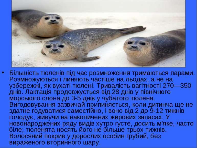 Більшість тюленів під час розмноження тримаються парами. Розмножуються і линя...