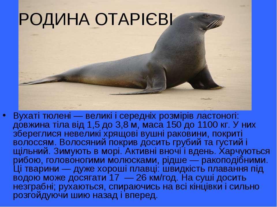 РОДИНА ОТАРІЄВІ Вухаті тюлені— великі і середніх розмірів ластоногі: довжина...