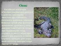 Китайські алігатори м'ясоїдні напівводні рептилії з довгим, масивним хвостом,...