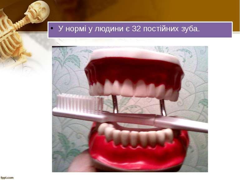 У нормі у людини є 32 постійних зуба.