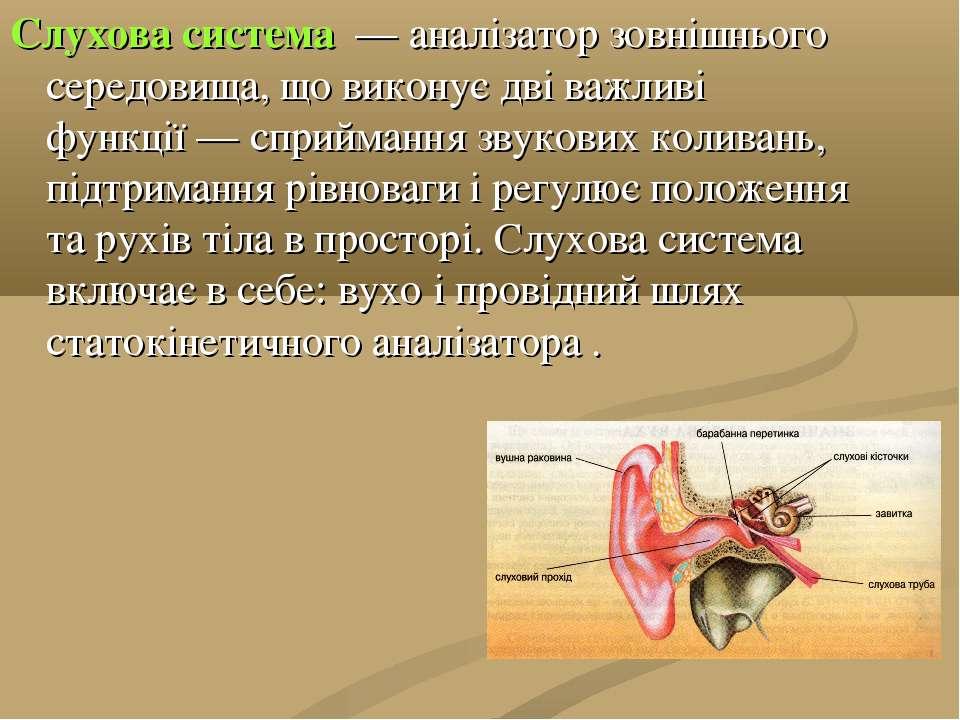 Слухова система — аналізатор зовнішнього середовища, що виконує дві важливі ...