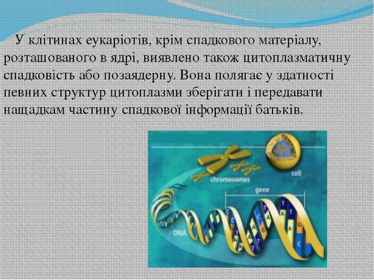 У клітинах еукаріотів, крім спадкового матеріалу, розташованого в ядрі, виявл...