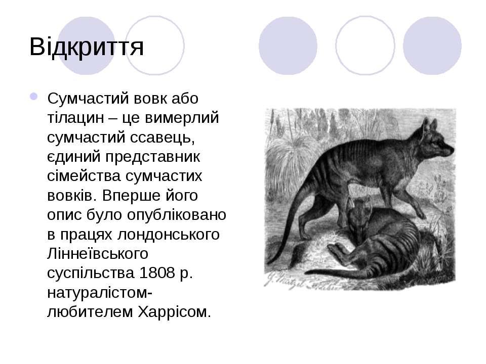 Відкриття Сумчастий вовк або тілацин – це вимерлий сумчастий ссавець, єдиний ...