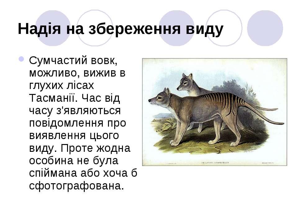 Надія на збереження виду Сумчастий вовк, можливо, вижив в глухих лісах Тасман...