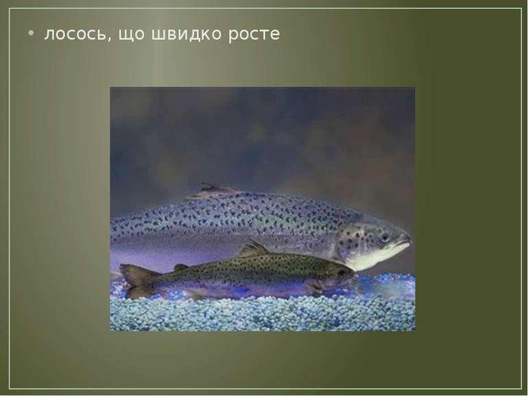 лосось, що швидко росте