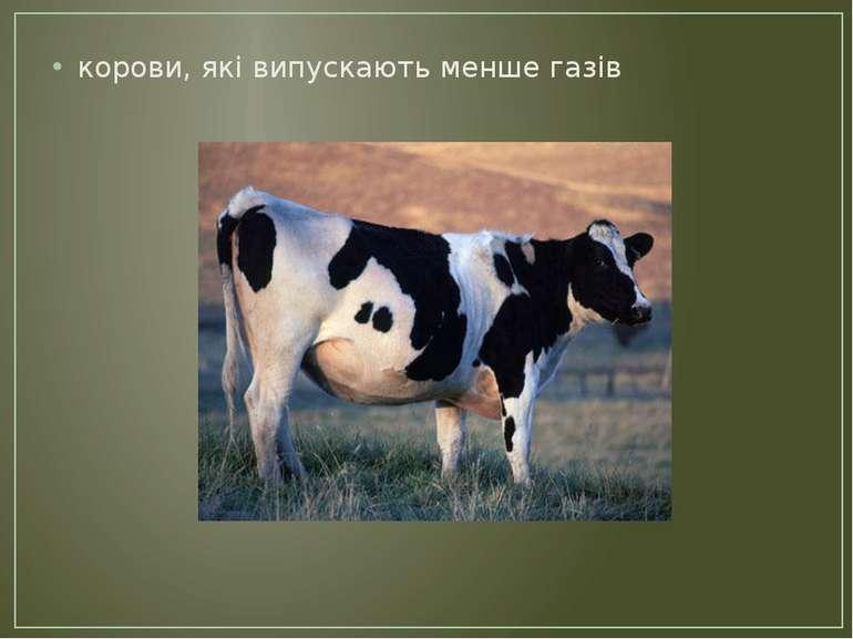 корови, які випускають менше газів