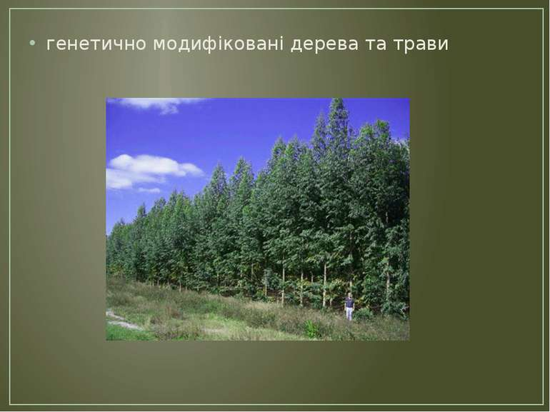 генетично модифіковані дерева та трави