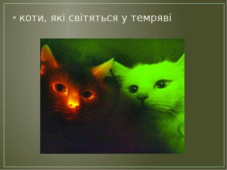 коти, які світяться у темряві