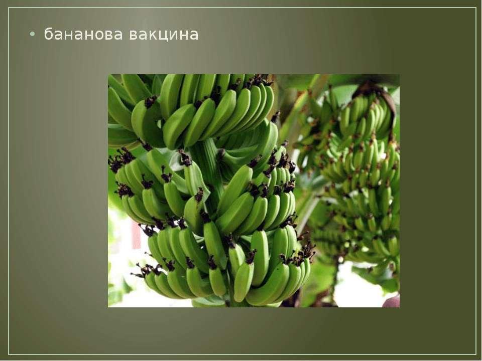бананова вакцина