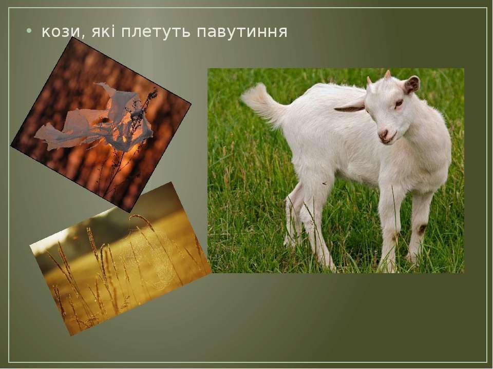кози, які плетуть павутиння
