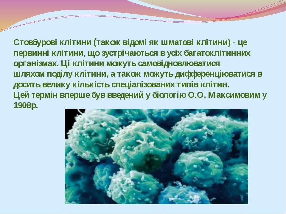 Стовбурові клітини (також відомі якшматові клітини) - це первинніклітини, щ...
