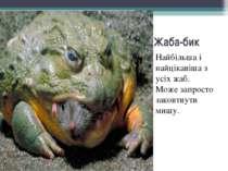 Жаба-бик Найбільша і найцікавіша з усіх жаб. Може запросто заковтнути мишу.