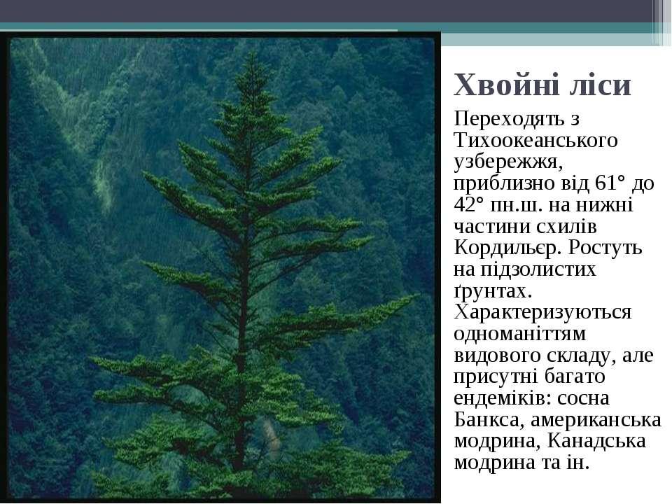 Хвойні ліси Переходять з Тихоокеанського узбережжя, приблизно від 61° до 42° ...