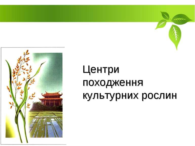 Центри походження культурних рослин